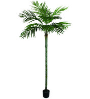 Areca Palm Tree - 210cm - Green