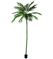 Areca Palm Tree - 270cm - Green