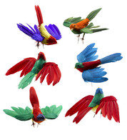 FLYING BIRDS  - Multicolour