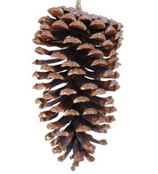 Large Pine Cones - Brown