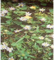 DAISY PHOTOPRINT FABRIC - Green
