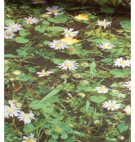 DAISY PHOTOPRINT FABRIC Green
