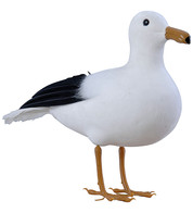STANDING SEAGULL - White
