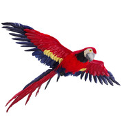 FLYING MACAW - Red