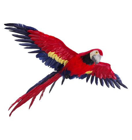 FLYING MACAW Red