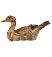 MALLARD DUCK - Brown