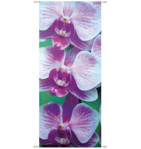 SOPHIA BANNER Purple