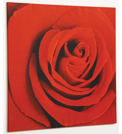 SCARLET PHOTO PAINTING - Red