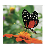 BUTTERFLY TEXTILE POSTER - Orange