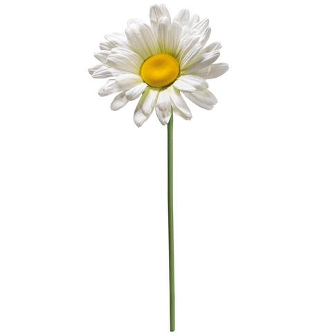 DAISY GRANDE White