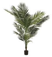 ARECA PALM - Green