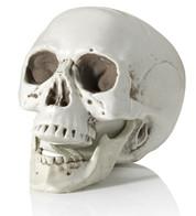 Realistic Skull - White