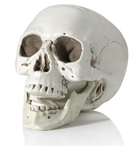Realistic Skull White