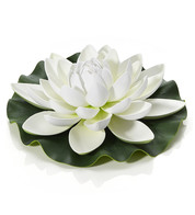 White Water Lily - White