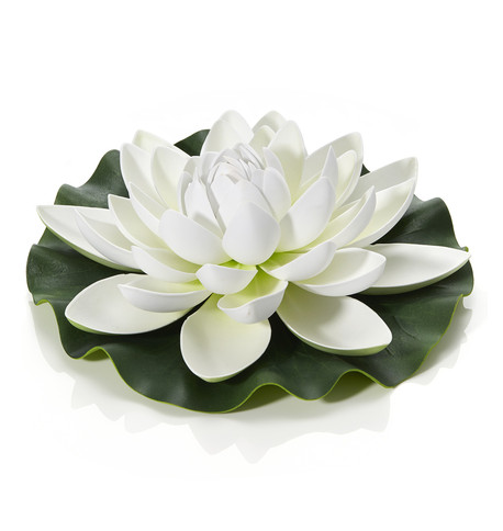 White Water Lily White