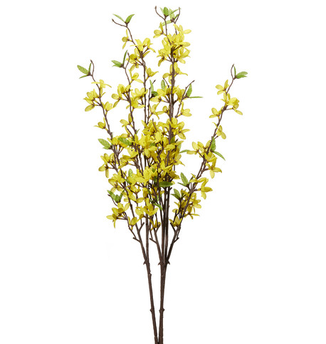 Forsythia Spray Yellow