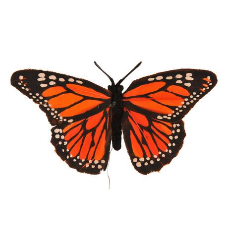feather butterfly picks Multi