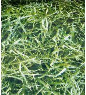 HIGHLANDS PHOTOPRINT PVC - Green