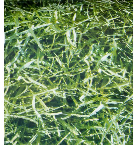 HIGHLANDS PHOTOPRINT PVC Green