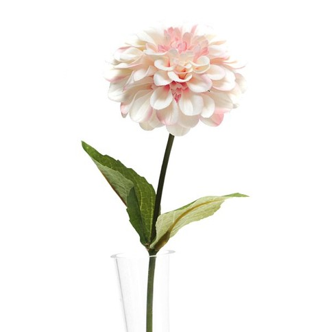 Zinnia - Pack of 3 Pink