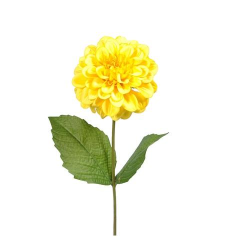 Zinnia - Pack of 3 Yellow