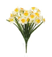 Narcissus Daffodil Bunch - Yellow