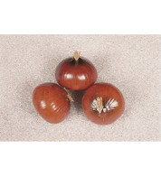 Artificial Onions - Pack of 3 - Brown
