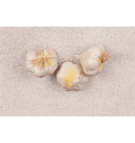 Artificial Garlic - Pack of 3 White