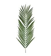 Areca Palm Leaf - Green