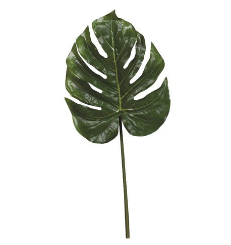 Split Philodendron Leaf Green