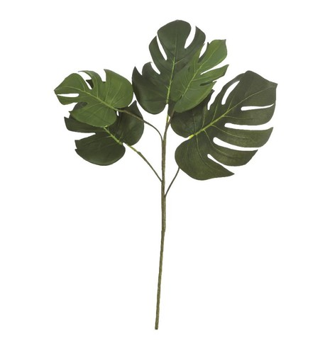 Split Philodendron Branch Green
