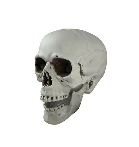 White Skull Decoration White