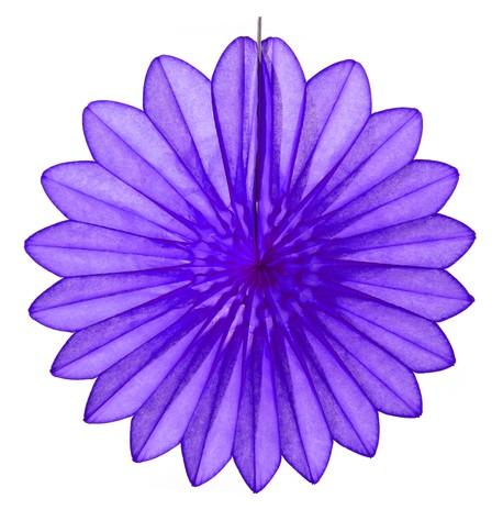 Daisy Fan - Purple Purple