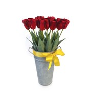 TULIPS - RED - Red