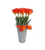 TULIPS - ORANGE - Orange
