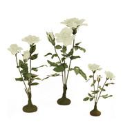 PARCHMENT ROSE TREES - CREAM - Cream